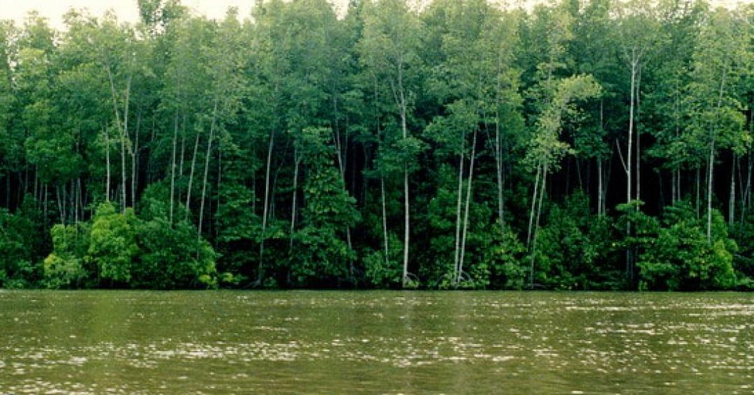 جنگل های حرا قشم